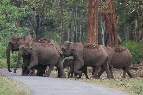 Nagarahole National Park, Karnataka