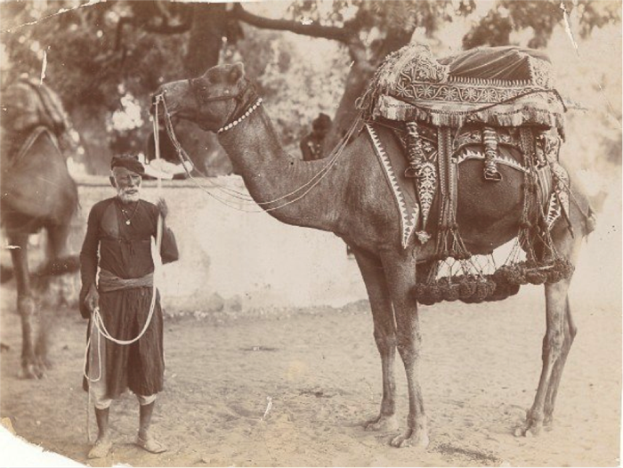 beautifully decorated Camel