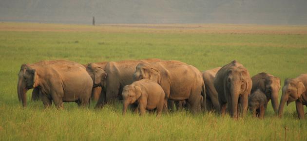 Corbett National Park Uttarakhand