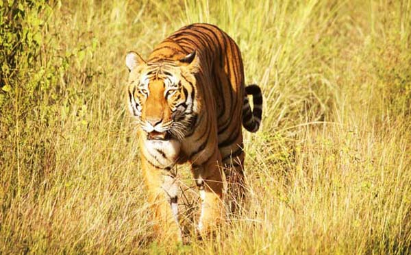 Corbett National Park In India
