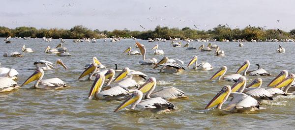 Kumarakom Bird Sanctuary, Kerala