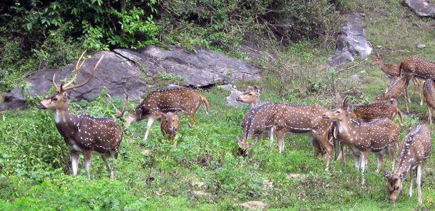 Parambikulam Wildlife Sanctuary Kerala