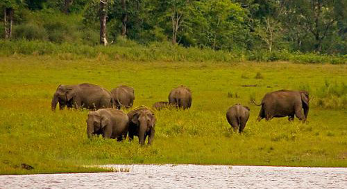Periyar National Park Kerala