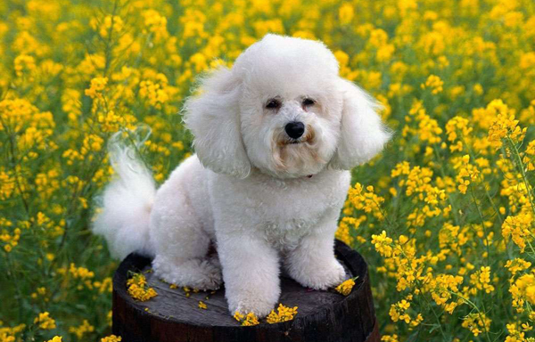 Top 10 Best Dog Breeds | Smartest and Most Popular Dog Breed in the ...