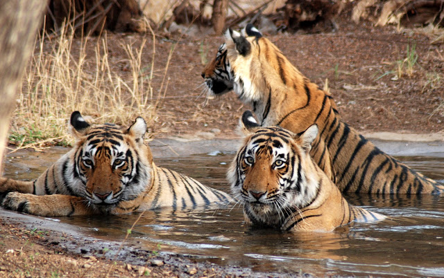 National-Park-in-india