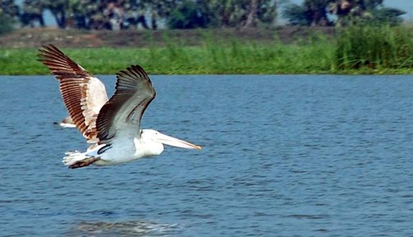 Kolleru Lake in Andhra Pradesh