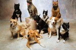 top ten Dog Breed