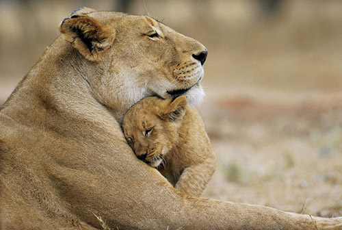 Gir National Park and Sasan Gir Sanctuary Gujarat