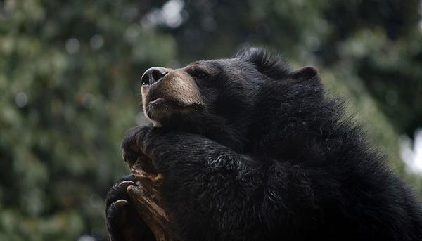 Govind Wildlife Sanctuary Uttarakhand