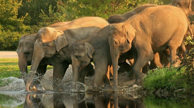 Mudumalai National Park and Wildlife Sanctuary Tamil Nadu