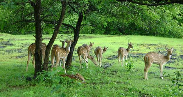 Sariska National Park, Rajasthan