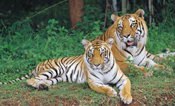 Wayanad Wildlife Sanctuary Kerala
