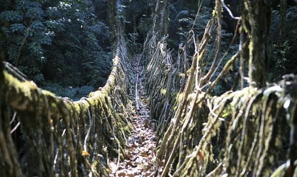 Living Root Bridges of Cherrapunji